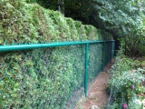 green-powder-coated-chain-link-fence