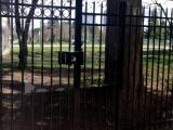 steel-picket-gate