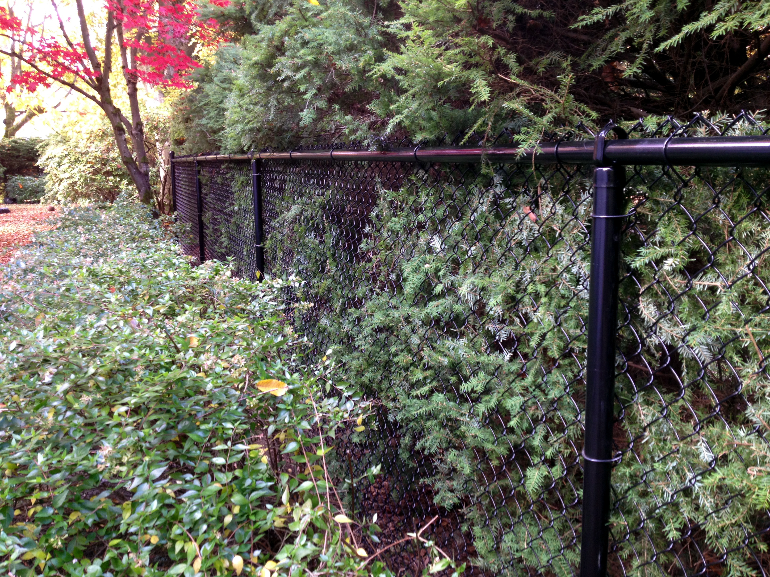 creative chain link fence ideas aesthetic ways to install a